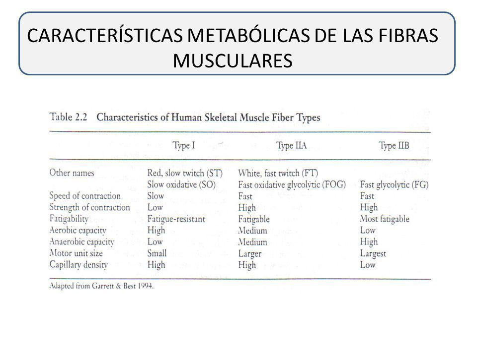 CARACTERÍSTICAS FUNCIONALES DE LOS DIFERENTES TIPOS DE FIBRAS MUSCULARES Es creído que la cantidad de ATPasa unida a miosina es en realidad limitante