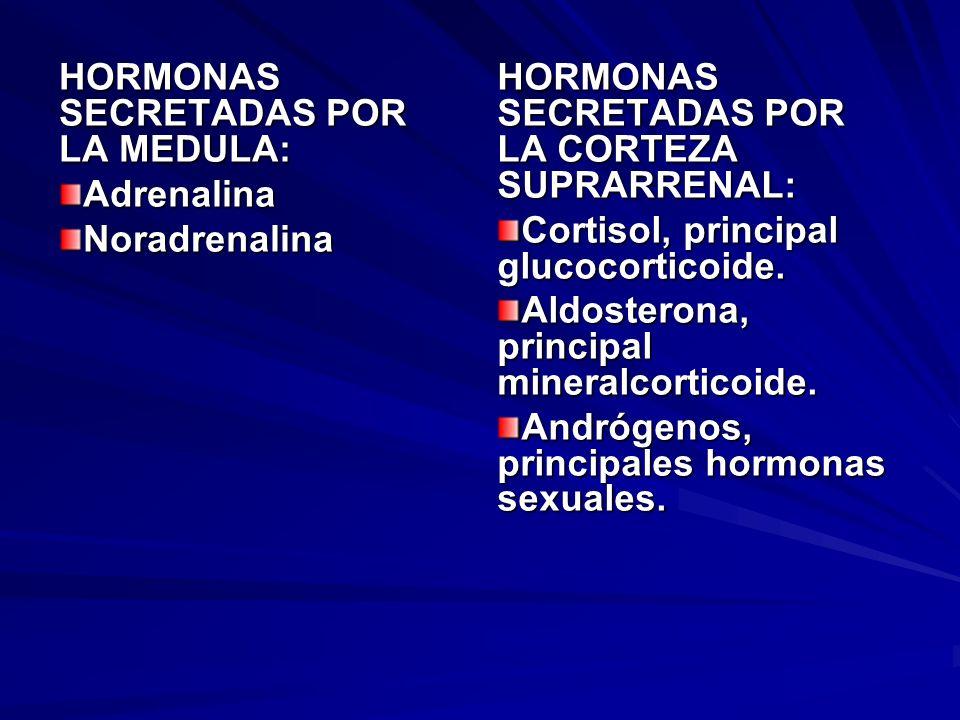 EFECTOS DE LA ADRENALINA Y LA NORADRENALINA ADRENALINA: actúa estimulando el sistema simpático y poniendo en alerta el organismo ante situaciones de alerta.