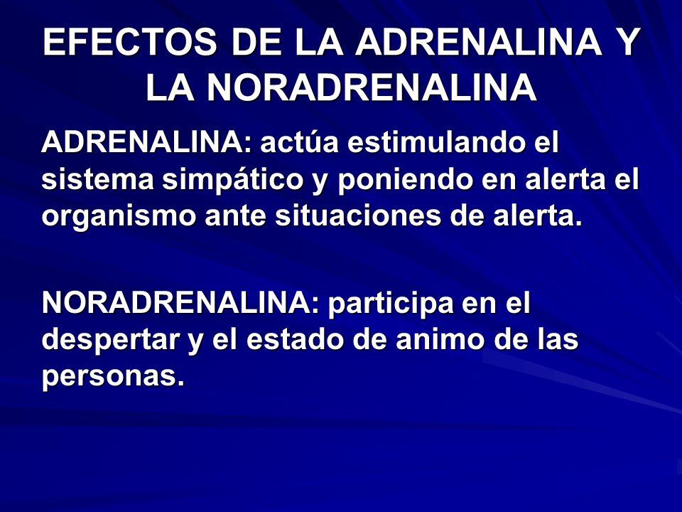 PRODUCCION DE GLUCOCORTICOIDES Y ANDROGENOS HIPOTALAMO HORMONA LIBERADORA DE CORTICOTROFINA (CRH) HIPOFISIS ANTERIOR ACTH ESTRUCTURA DE LA GLANDULA SUPRARENAL CORTISOL, ANDROGENOS CORTISOL, ANDROGENOS ORGANOS EFECTORES