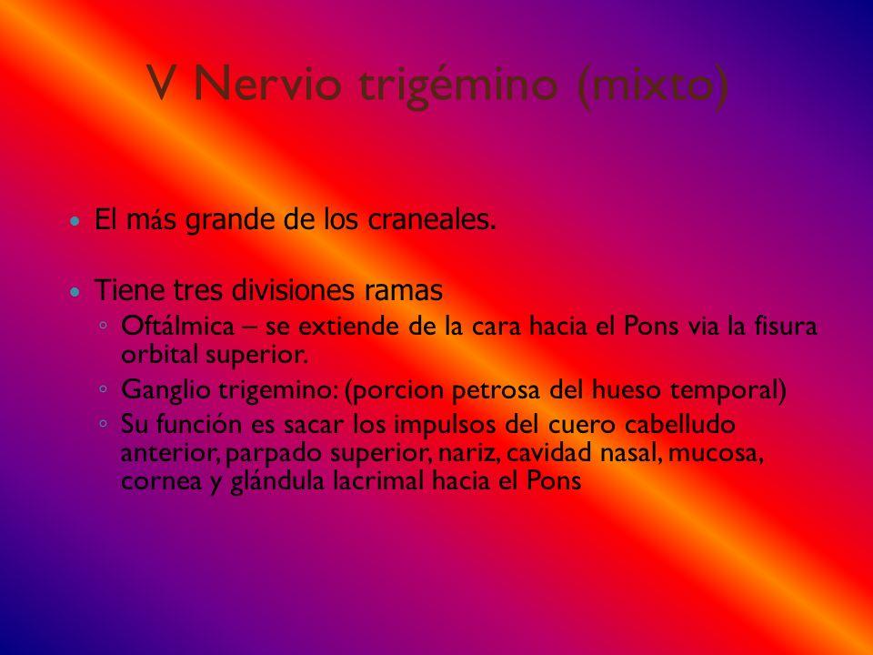 V Nervio trigémino (mixto) El m á s grande de los craneales. Tiene tres divisiones ramas Oftálmica – se extiende de la cara hacia el Pons via la fisur