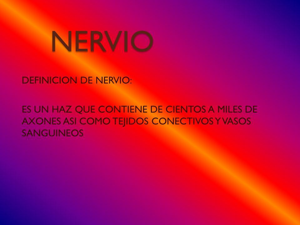 NERVIO DEFINICION DE NERVIO: ES UN HAZ QUE CONTIENE DE CIENTOS A MILES DE AXONES ASI COMO TEJIDOS CONECTIVOS Y VASOS SANGUINEOS
