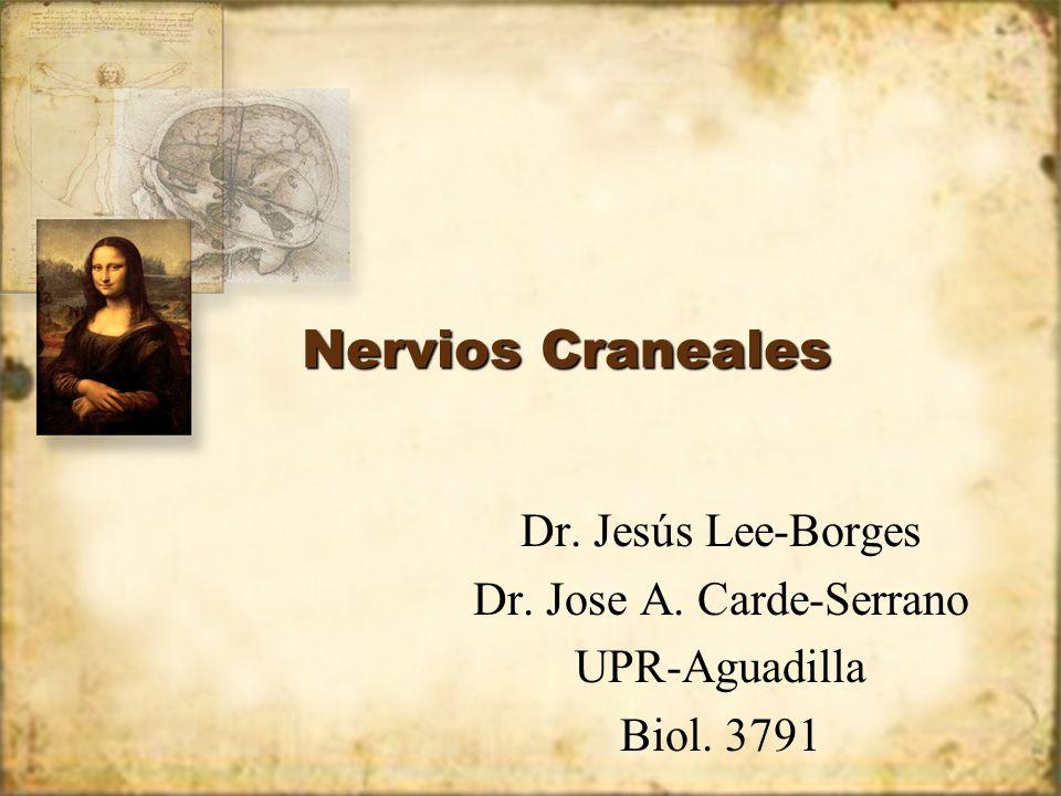 Nervios Craneales Dr. Jesús Lee-Borges Dr. Jose A. Carde-Serrano UPR-Aguadilla Biol. 3791 Dr. Jesús Lee-Borges Dr. Jose A. Carde-Serrano UPR-Aguadilla