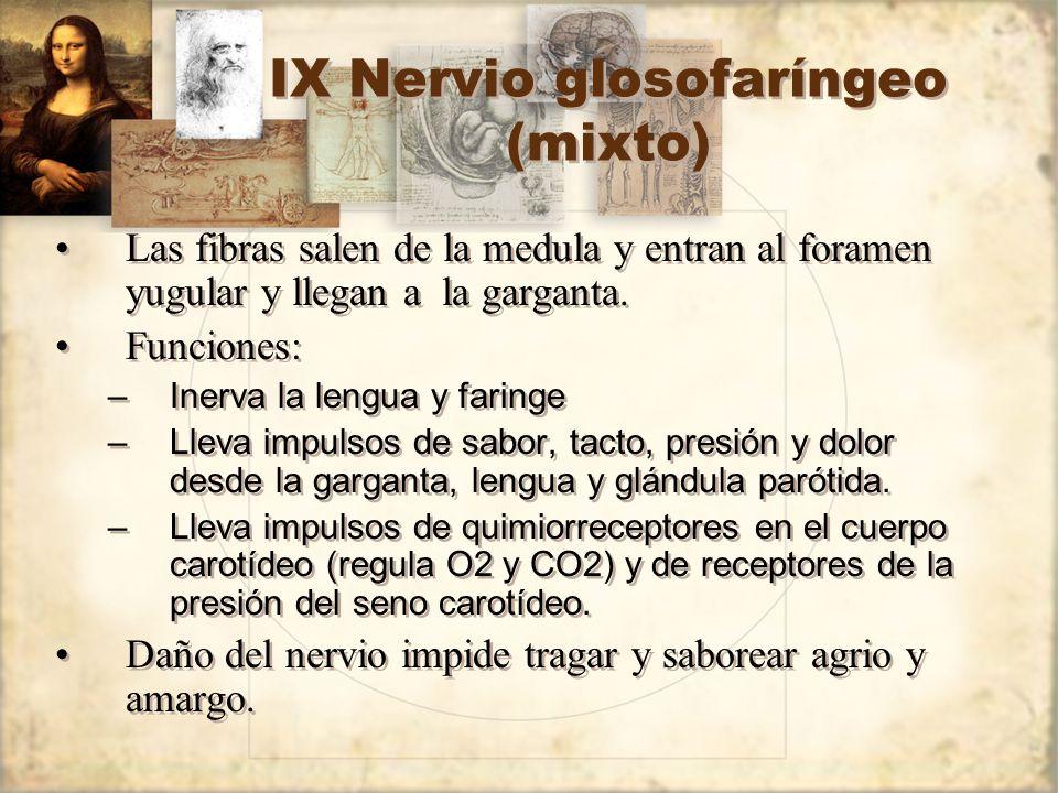 IX Nervio glosofaríngeo (mixto) Las fibras salen de la medula y entran al foramen yugular y llegan a la garganta. Funciones: –Inerva la lengua y farin