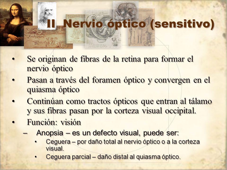 II Nervio óptico (sensitivo) Se originan de fibras de la retina para formar el nervio óptico Pasan a través del foramen óptico y convergen en el quias