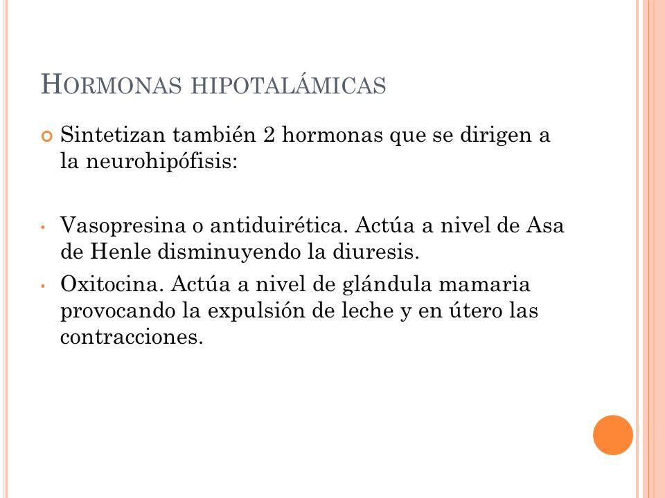 H ORMONAS HIPOTALÁMICAS Sintetizan también 2 hormonas que se dirigen a la neurohipófisis: Vasopresina o antiduirética. Actúa a nivel de Asa de Henle d