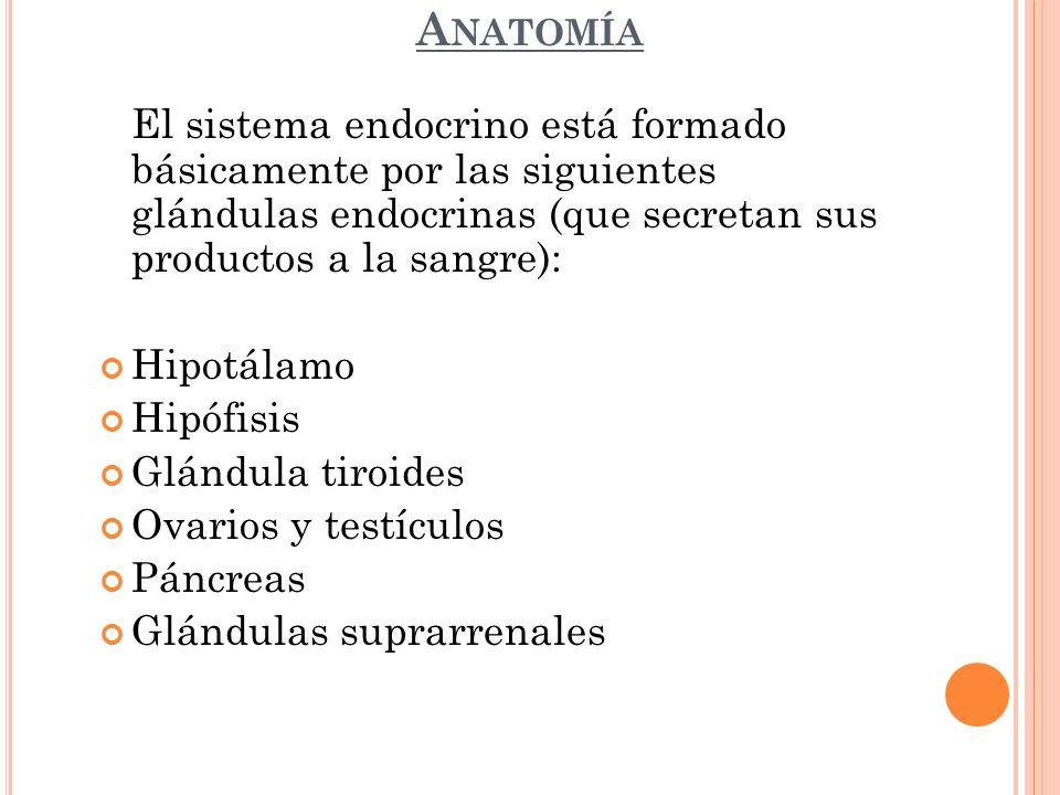 A NATOMÍA El sistema endocrino está formado básicamente por las siguientes glándulas endocrinas (que secretan sus productos a la sangre): Hipotálamo H
