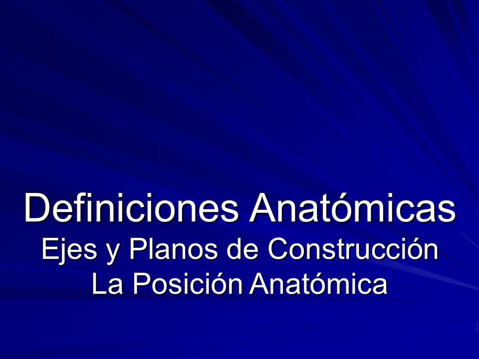 Definiciones Anatómicas Ejes y Planos de Construcción La Posición Anatómica