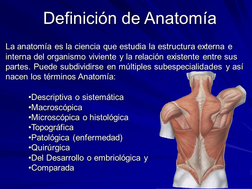 La anatomía es la ciencia que estudia la estructura externa e interna del organismo viviente y la relación existente entre sus partes. Puede subdividi