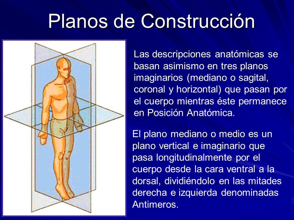 Planos de Construcción Las descripciones anatómicas se basan asimismo en tres planos imaginarios (mediano o sagital, coronal y horizontal) que pasan p