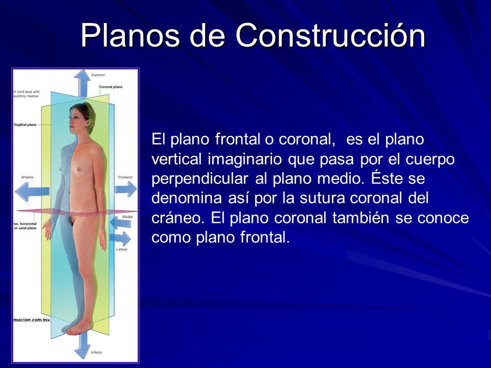 Planos de Construcción El plano frontal o coronal, es el plano vertical imaginario que pasa por el cuerpo perpendicular al plano medio. Éste se denomi