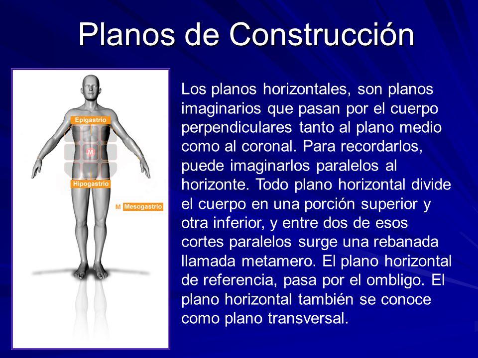 Planos de Construcción Los planos horizontales, son planos imaginarios que pasan por el cuerpo perpendiculares tanto al plano medio como al coronal. P