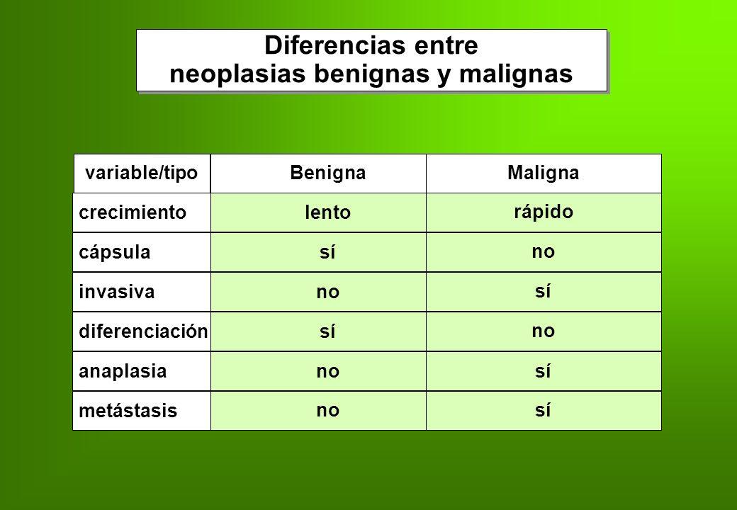variable/tipoBenignaMaligna diferenciaciónsí no anaplasianosícápsulasí no invasivano sí crecimientolento rápido metástasis nosí Diferencias entre neop