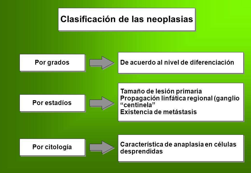 Clasificación de las neoplasias Por grados De acuerdo al nivel de diferenciación Por estadíos Tamaño de lesión primaria Propagación linfática regional