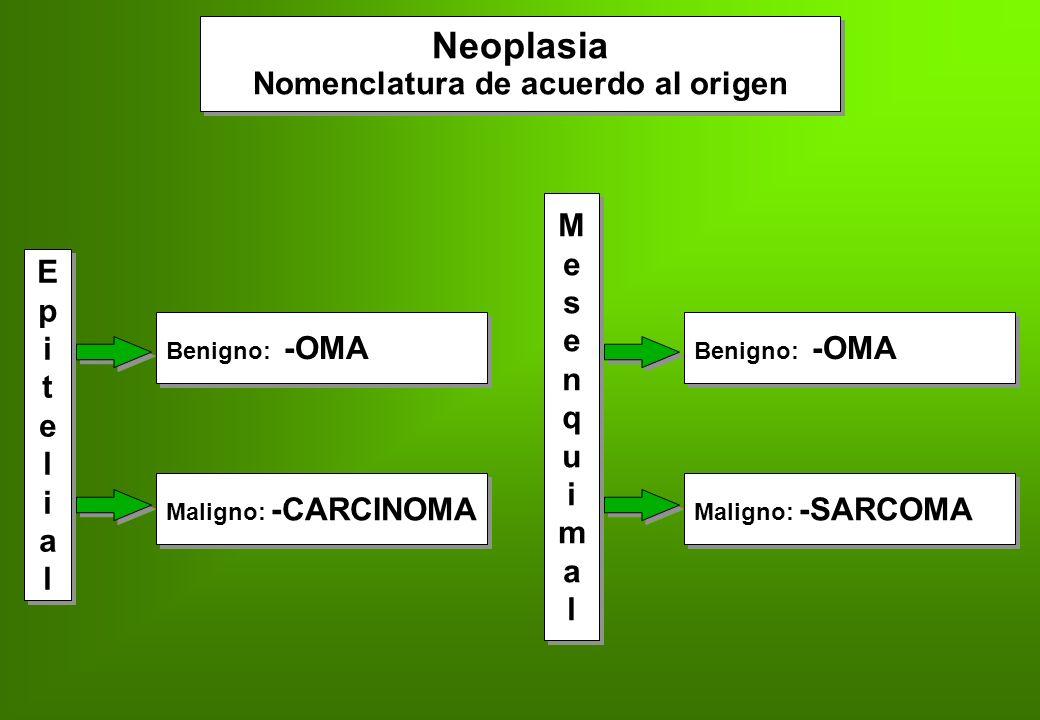 Neoplasia Metástasis Siembras neoplásicas separadas de la localización primaria Siembras neoplásicas separadas de la localización primaria Diseminación Linfática (carcinomas) Hemática (sarcomas) Siembra de cavidades Linfática (carcinomas) Hemática (sarcomas) Siembra de cavidades ¡Sólo las producen las neoplasias malignas.