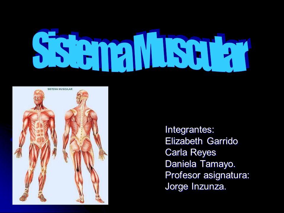 Integrantes: Elizabeth Garrido Carla Reyes Daniela Tamayo. Profesor asignatura: Jorge Inzunza.