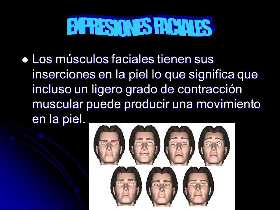 Los músculos faciales tienen sus inserciones en la piel lo que significa que incluso un ligero grado de contracción muscular puede producir una movimi