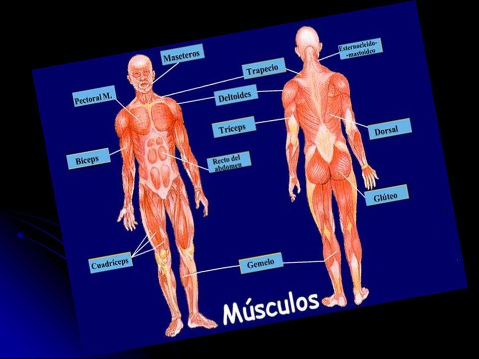 Desgarro: ruptura del tejido muscular.Desgarro: ruptura del tejido muscular.
