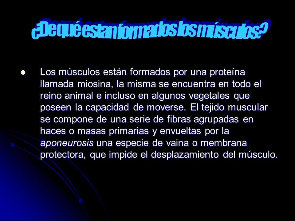 Los músculos están formados por una proteína llamada miosina, la misma se encuentra en todo el reino animal e incluso en algunos vegetales que poseen