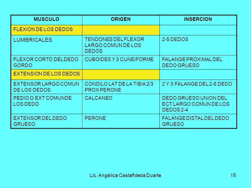 Lic. Angélica Castañdeda Duarte15 MUSCULOORIGENINSERCION FLEXION DE LOS DEDOS LUMBRICALES TENDONES DEL FLEXOR LARGO COMUN DE LOS DEDOS 2-5 DEDOS FLEXO