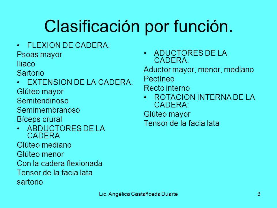 Lic. Angélica Castañdeda Duarte3 Clasificación por función. FLEXION DE CADERA: Psoas mayor Iliaco Sartorio EXTENSION DE LA CADERA: Glúteo mayor Semite