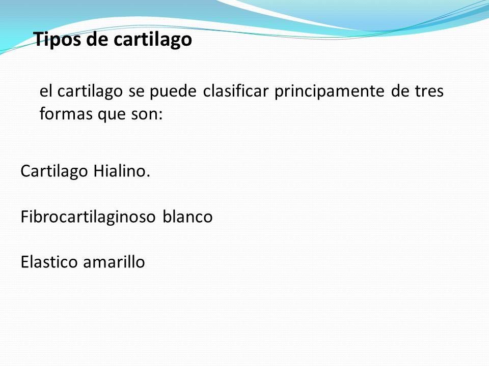 Tipos de cartilago el cartilago se puede clasificar principamente de tres formas que son: Cartilago Hialino. Fibrocartilaginoso blanco Elastico amaril