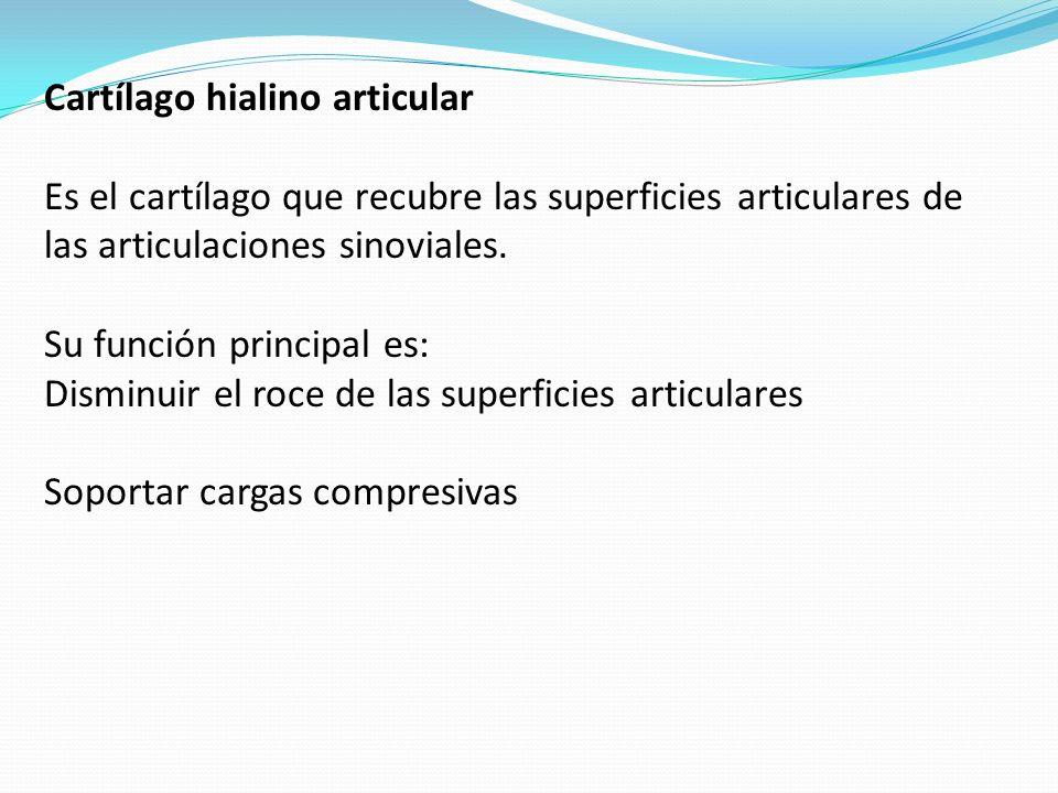 Cartílago hialino articular Es el cartílago que recubre las superficies articulares de las articulaciones sinoviales. Su función principal es: Disminu