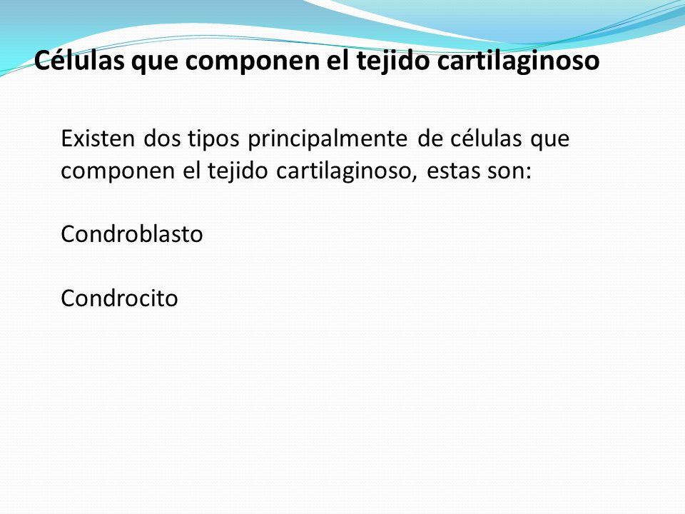 Células que componen el tejido cartilaginoso Existen dos tipos principalmente de células que componen el tejido cartilaginoso, estas son: Condroblasto