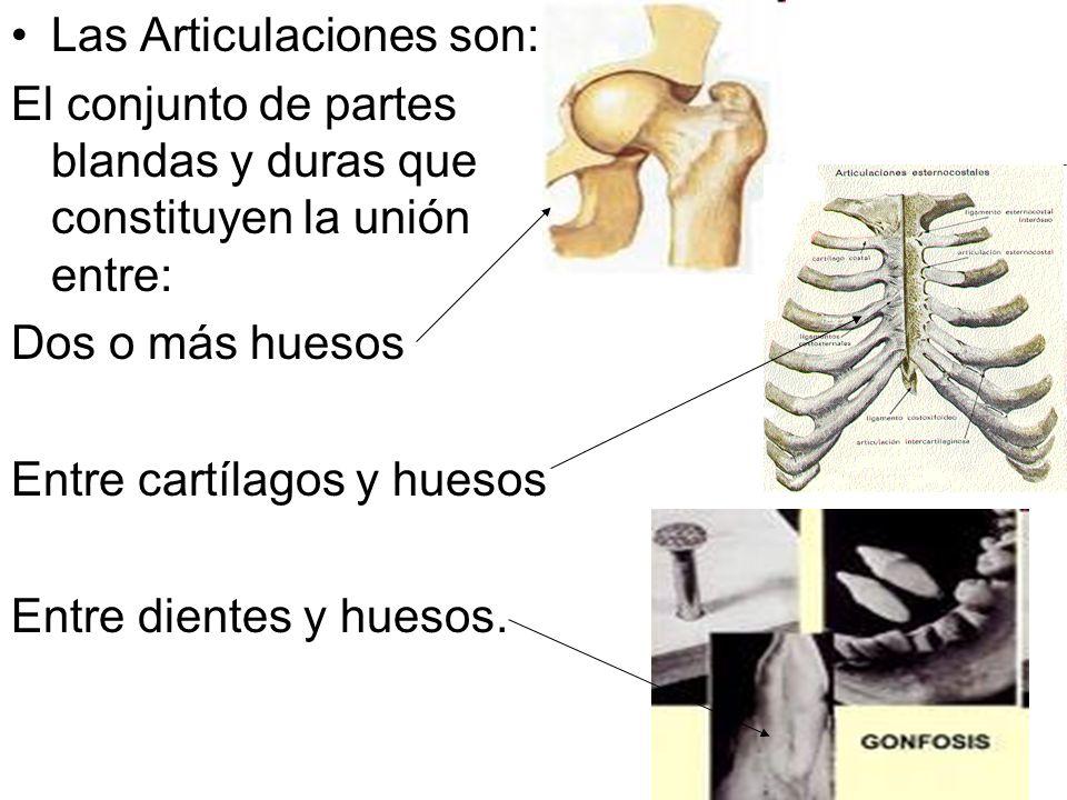 Las Articulaciones son: El conjunto de partes blandas y duras que constituyen la unión entre: Dos o más huesos Entre cartílagos y huesos Entre dientes