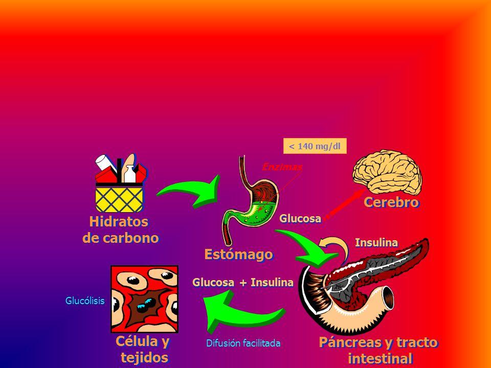 DIABETES La insulina, (secretada por el páncreas) disminuye la concentración de glucosa en la sangre, favoreciendo la formación de glucógeno y facilit