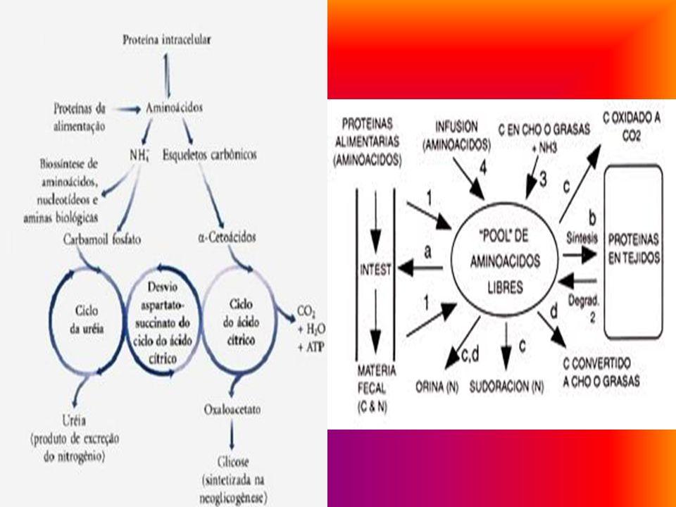 Las proteínas pueden clasificarse de diversos modos: Según su conformación: Proteínas fibrosas: cuando forman estructuras alargadas llamadas fibras. C