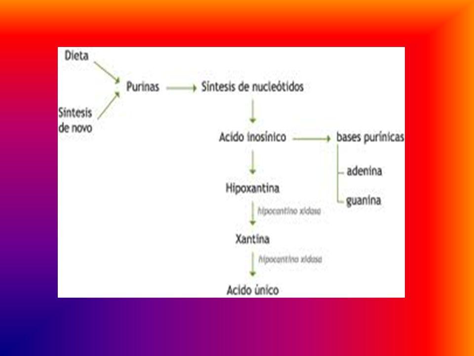 GOTA Es una enfermedad que limita la eliminación de ácido úrico a través de los riñones, la consecuencia es el dolor en las articulaciones, con crisis
