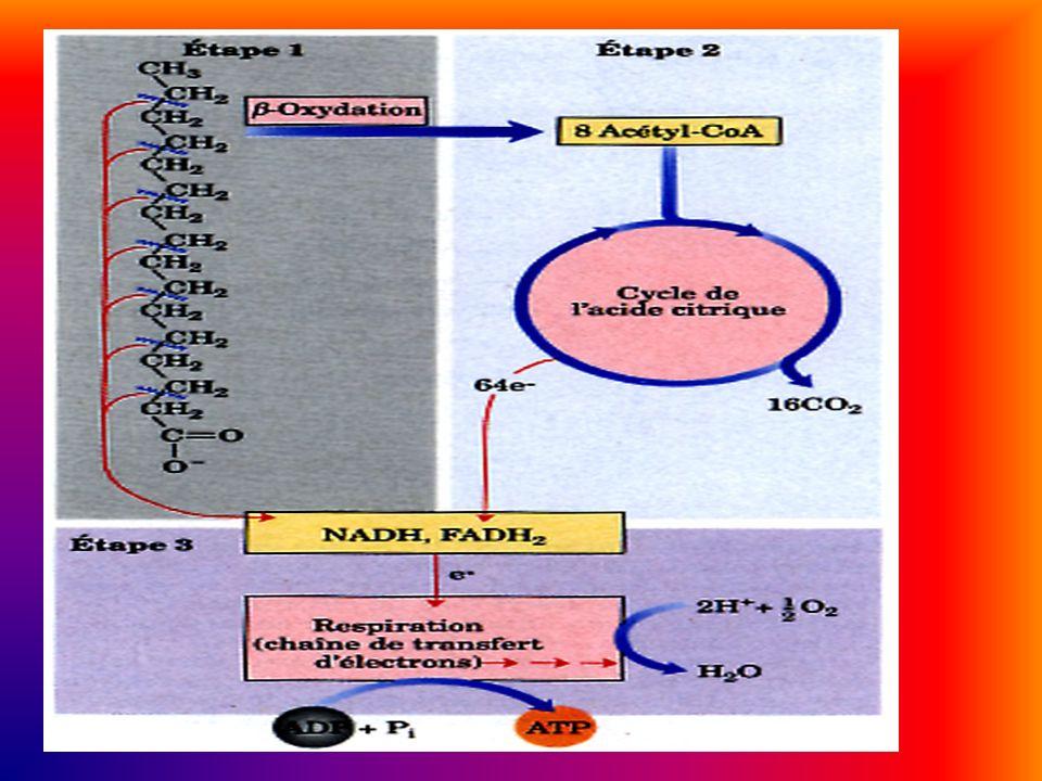 Los lípidos se clasifican en: Lípidos saponificables: son aquellos que contienen ácidos grasos. Simples: sólo contienen O, C y H. Ej: acilglicéridos,