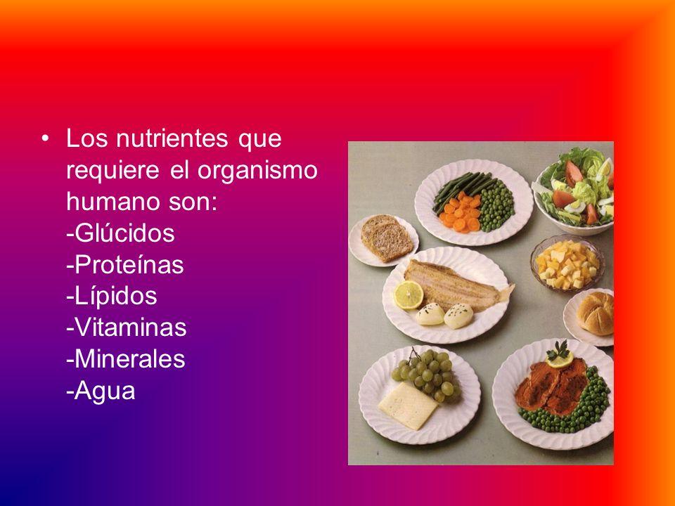 Los nutrientes que requiere el organismo humano son: -Glúcidos -Proteínas -Lípidos -Vitaminas -Minerales -Agua