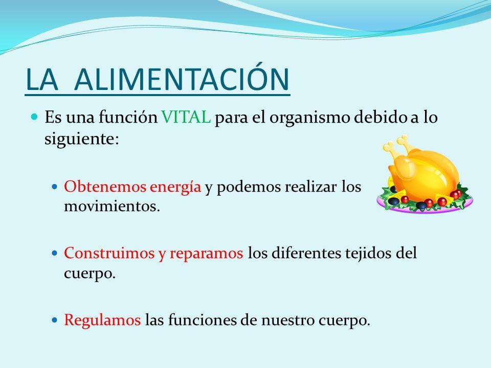 LA ALIMENTACIÓN Es una función VITAL para el organismo debido a lo siguiente: Obtenemos energía y podemos realizar los movimientos.