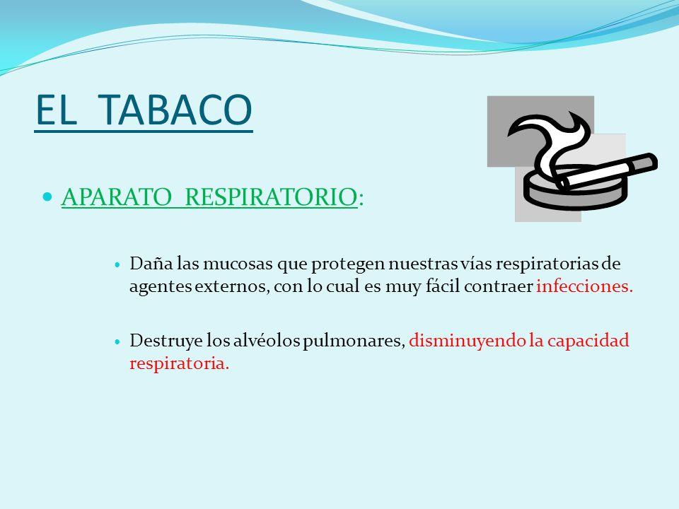 EL TABACO APARATO RESPIRATORIO: Daña las mucosas que protegen nuestras vías respiratorias de agentes externos, con lo cual es muy fácil contraer infecciones.