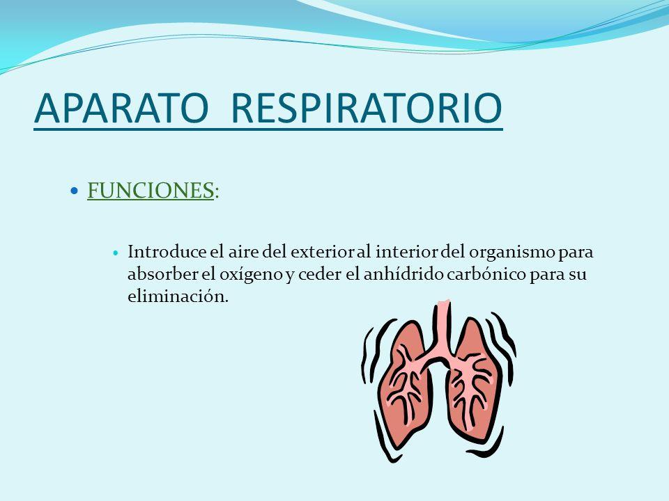 APARATO RESPIRATORIO FUNCIONES: Introduce el aire del exterior al interior del organismo para absorber el oxígeno y ceder el anhídrido carbónico para su eliminación.