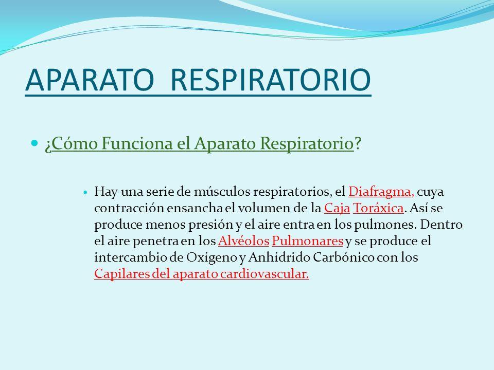 APARATO RESPIRATORIO ¿Cómo Funciona el Aparato Respiratorio.
