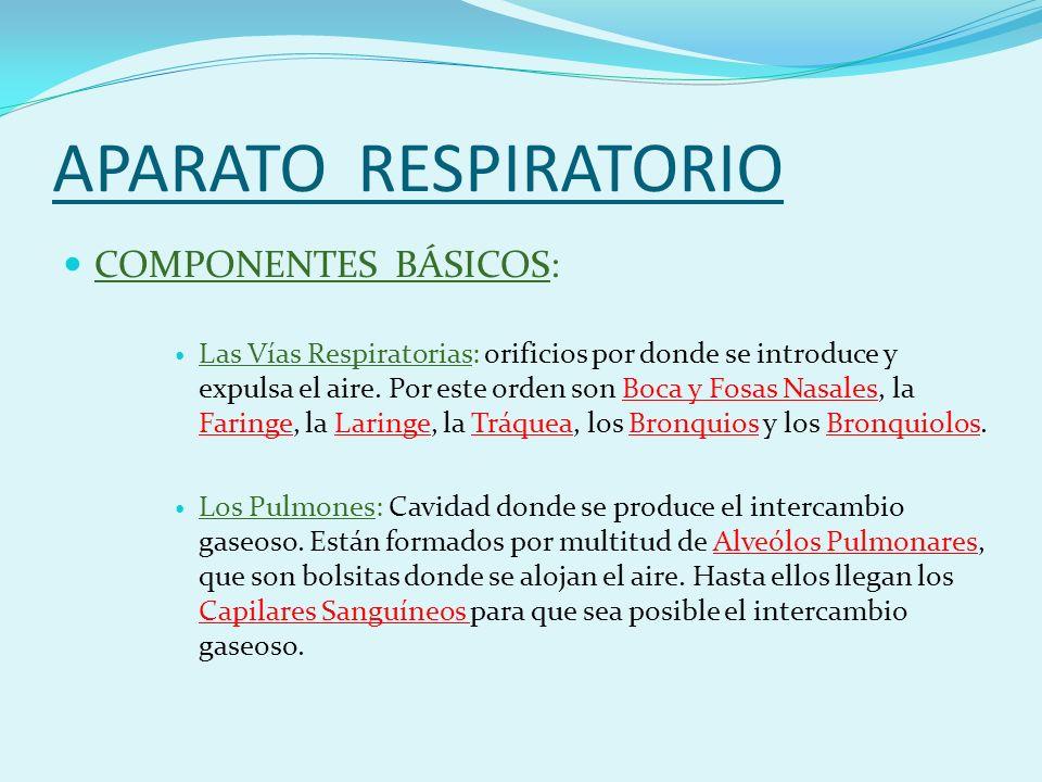 APARATO RESPIRATORIO COMPONENTES BÁSICOS: Las Vías Respiratorias: orificios por donde se introduce y expulsa el aire.