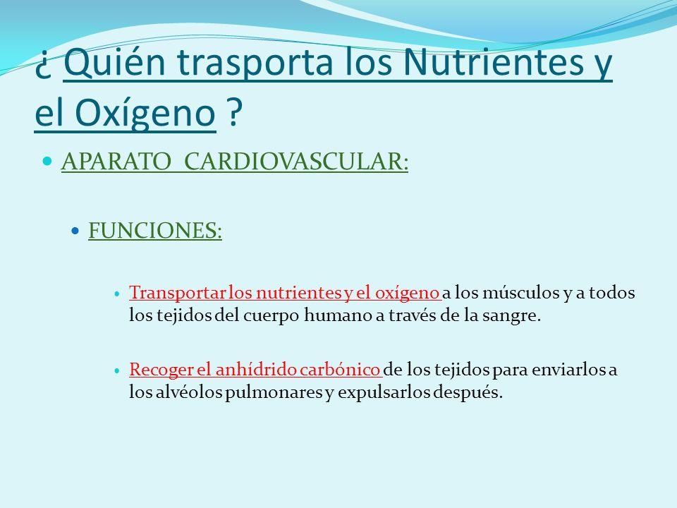 ¿ Quién trasporta los Nutrientes y el Oxígeno .