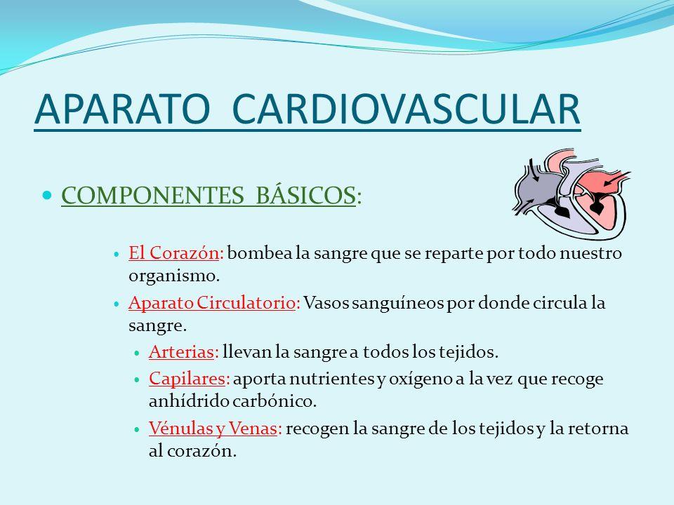 APARATO CARDIOVASCULAR COMPONENTES BÁSICOS: El Corazón: bombea la sangre que se reparte por todo nuestro organismo.