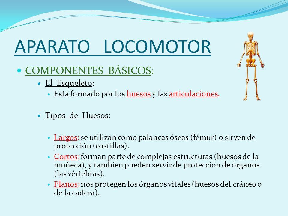 APARATO LOCOMOTOR COMPONENTES BÁSICOS: El Esqueleto: Está formado por los huesos y las articulaciones.