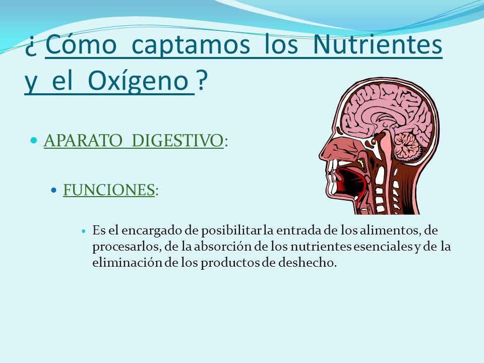 APARATO DIGESTIVO COMPONENTES BÁSICOS: La Boca: es la vía de entrada de los alimentos.