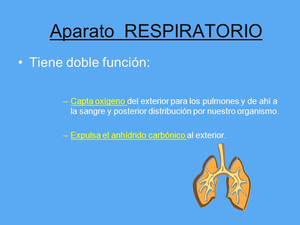 ¿ Cuáles son los sistemas y aparatos de nuestro Organismo? Aparato Respiratorio. Aparato Digestivo. Aparato Cardiovascular. Aparato Locomotor. Sistema