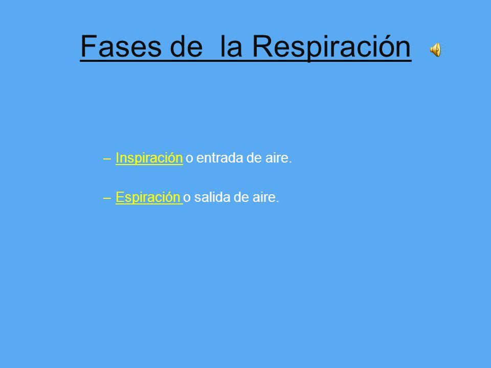 Aparato RESPIRATORIO Tiene doble función: –Capta oxígeno del exterior para los pulmones y de ahí a la sangre y posterior distribución por nuestro orga