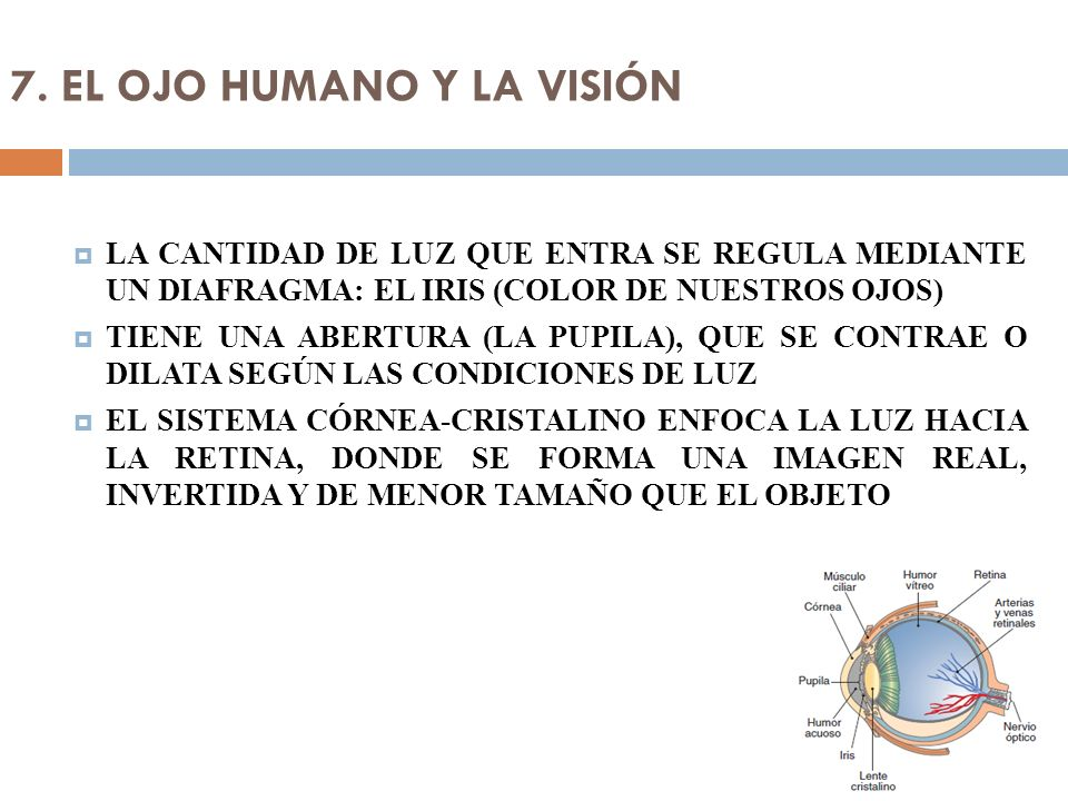 7. EL OJO HUMANO Y LA VISIÓN LA CANTIDAD DE LUZ QUE ENTRA SE REGULA MEDIANTE UN DIAFRAGMA: EL IRIS (COLOR DE NUESTROS OJOS) TIENE UNA ABERTURA (LA PUP