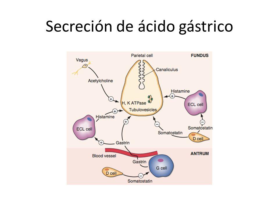 Secreción de ácido gástrico