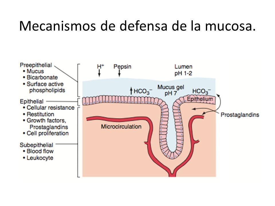Mecanismos de defensa de la mucosa.