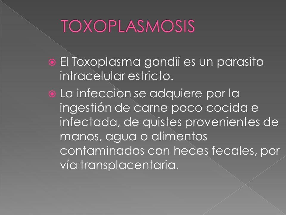 El Toxoplasma gondii es un parasito intracelular estricto. La infeccion se adquiere por la ingestión de carne poco cocida e infectada, de quistes prov