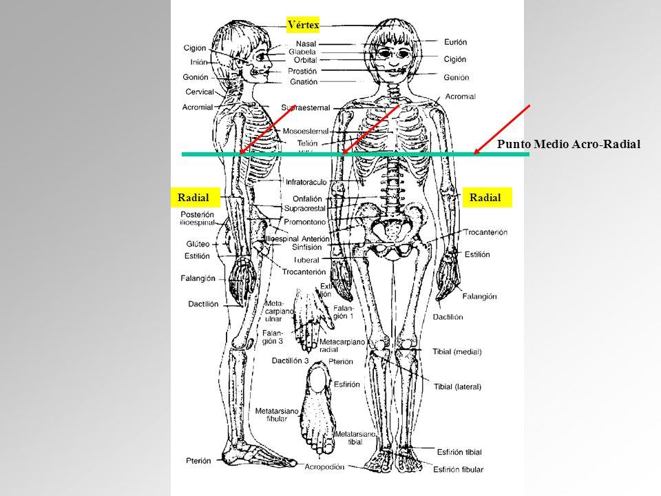 Vértex Radial Punto Medio Acro-Radial
