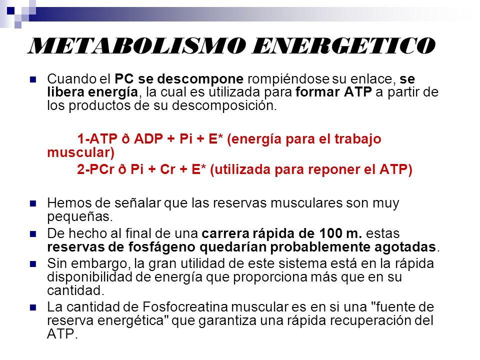 METABOLISMO ENERGETICO Cuando el PC se descompone rompiéndose su enlace, se libera energía, la cual es utilizada para formar ATP a partir de los produ